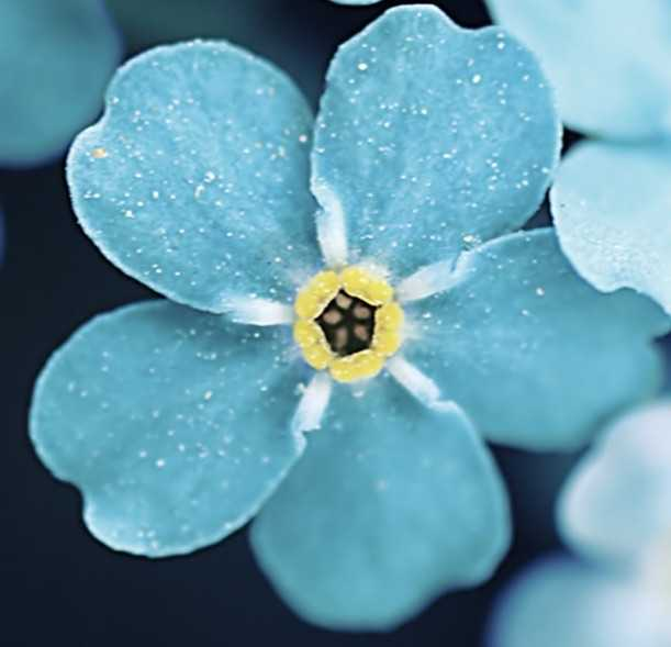 Çiçekleri iPhone İle Sulayın