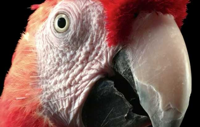 iphone6s-papagan-kus