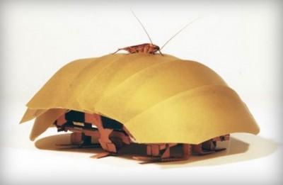 Bu Robot Hamamböceği Arama-Kurtarmanın Geleceği Olabilir