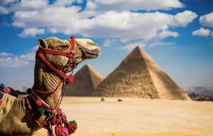 Mısır Pamuğunun Blockchain ile Tanışma Vakti