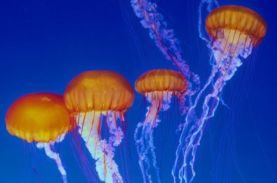 Jelly Cam ile Okyanusa Davetlisiniz [Strese Yeni Çözüm!]